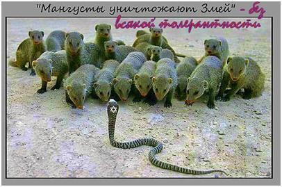 http://wpc2.narod.ru/01/mangusti.jpg