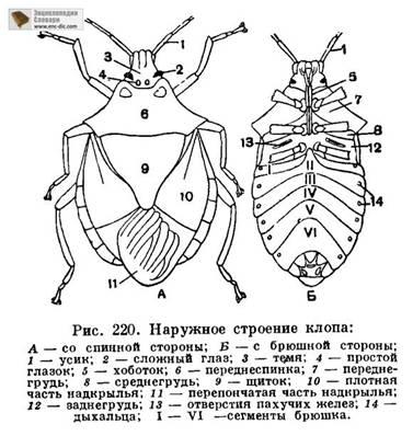 Сопротивление - Страница 5 Bug_scheme